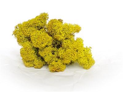Мох стабилизированный желтый - фото 5084