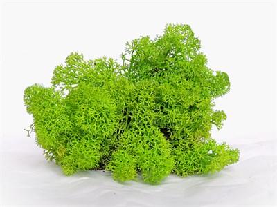 Мох стабилизированный зеленый - фото 5087